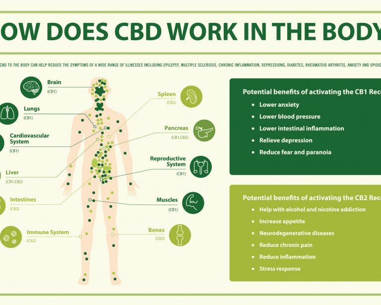 Effects of CBD