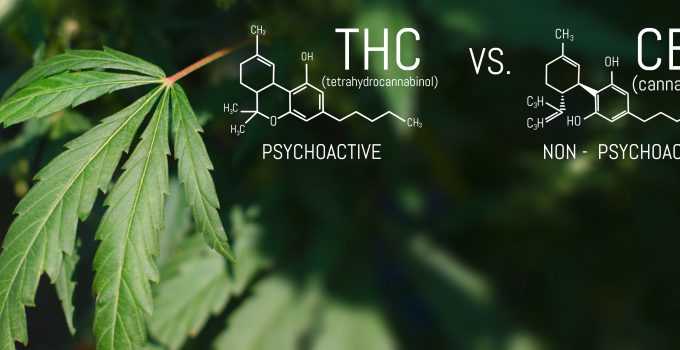 What are THC and CBD? Similarities and Differences